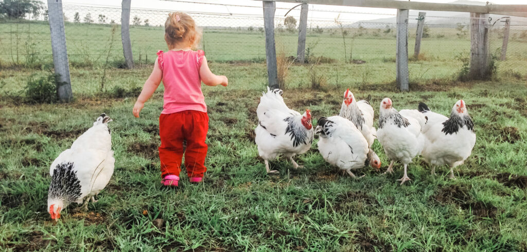 young child with her pet chickens
