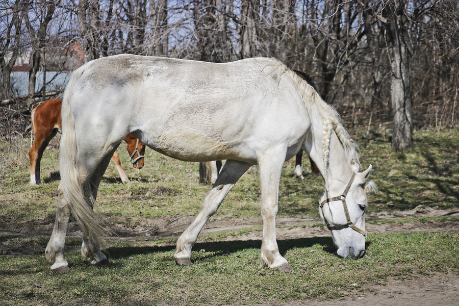 Joint supplements for horses can be very beneficial to your horses comfort and performance