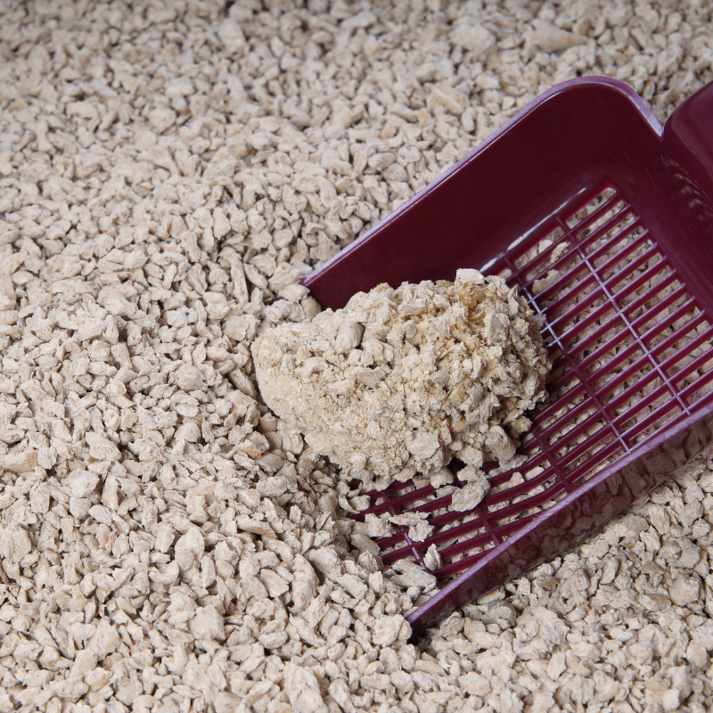 Clumping clay litter clumps together for easy cleaning