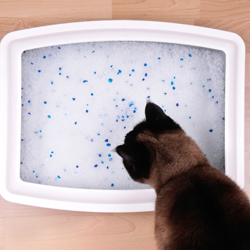 Crystal cat litter is made up of tiny silica beads