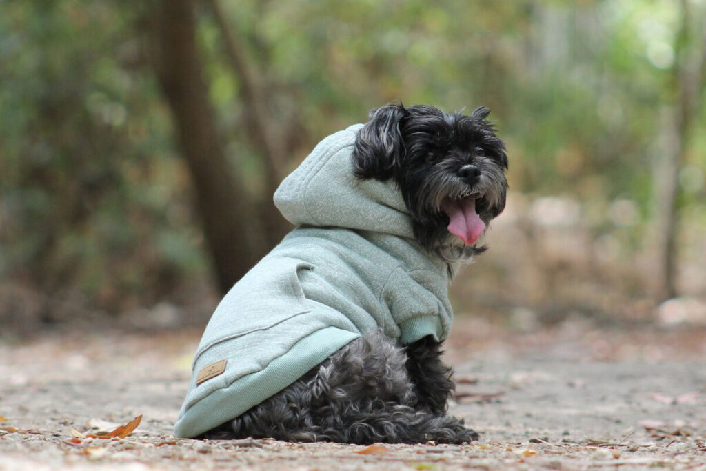 A happy dog out and about in a cosy coat to keep them warm.