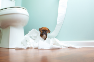 A cute puppy in toilet training